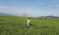 Trồng cỏ và thức ăn thô xanh cho gia súc, gia cầm