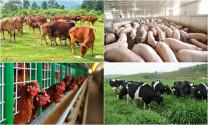 Tác động của Hiệp định thương mại tới chăn nuôi