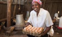 Đánh thức tiềm năng thịt và trứng gia cầm