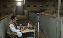 Tây Ban Nha: Trại nuôi heo tiên tiến nhất