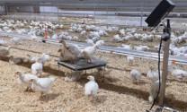 Đầu tư chăn nuôi thông minh