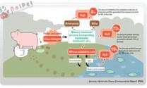 Tác động của chăn nuôi đến biến đổi khí hậu và môi trường