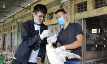 Những hạn chế cố hữu của ngành chăn nuôi