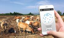 Khoa học công nghệ: Nền tảng bền vững