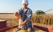 2020: Giá thức ăn chăn nuôi sẽ ổn định