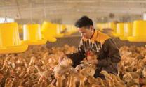 Chăn nuôi gia cầm: Những kết quả đáng ghi nhận