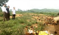 Tuyên Quang: Chăn nuôi nhỏ lẻ - Nguy cơ bùng phát dịch bệnh