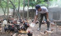 Dịch bệnh, phép thử cho ngành nông nghiệp Hà Nội