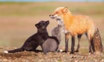 Xử lý căn cơ hành vi buôn bán, tiêu thụ động vật hoang dã