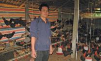 Hà Giang: Thu nhập cao từ nuôi gà quy mô trang trại