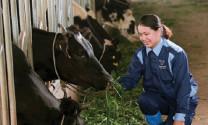 Phát triển đàn bò sữa ở Hà Nam: Làm sao để vượt khó?