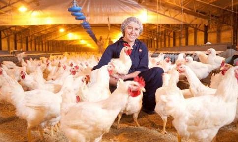 EU xây dựng ngành chăn nuôi bền vững thế nào?