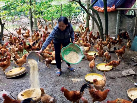 Quy trình thực hành chăn nuôi tốt