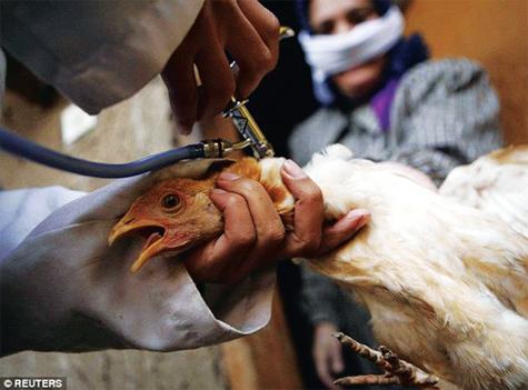 Kinh nghiệm điều trị bệnh đậu gà
