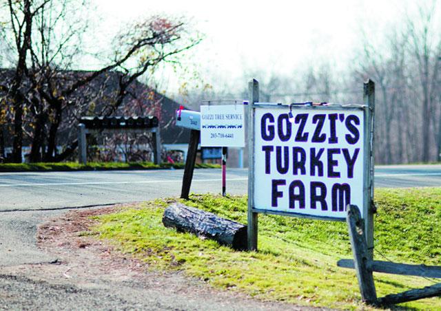trang trại gà tây - chăn nuôi