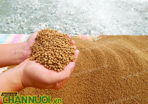 Các tập đoàn thức ăn chăn nuôi lớn nhất Việt Nam