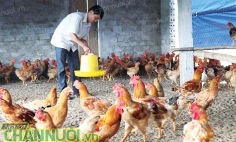 chăn nuôi gia cầm vietGAP - chăn nuôi