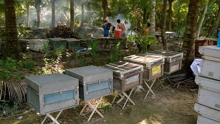 nuôi ong lấy mật cầu kè trà vinh - chăn nuôi