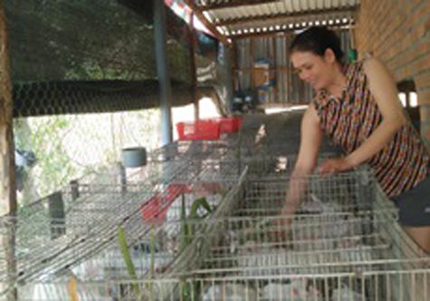 Phú Yên: Thành công với mô hình nuôi thỏ '3 sạch'