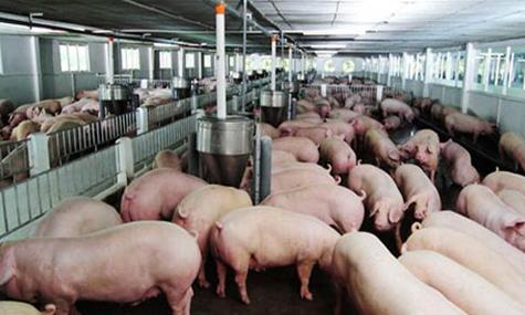 khoáng vi lượng trong chăn nuôi - chăn nuôi