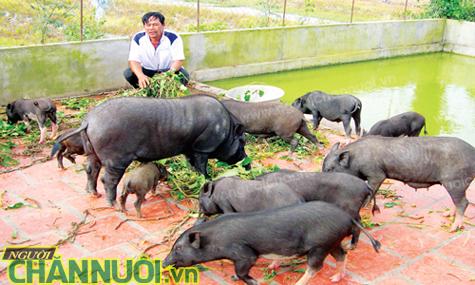 điều kiện đầu tư một số ngành nghề chăn nuôi - chăn nuôi