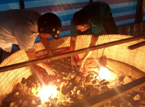 Bến Tre: Triển khai mô hình sản xuất giống gà tàu lai nòi F2