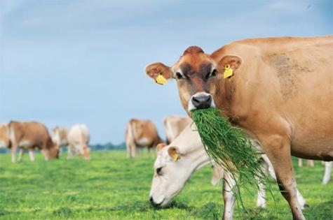Vai trò của vi khuẩn dạ cỏ
